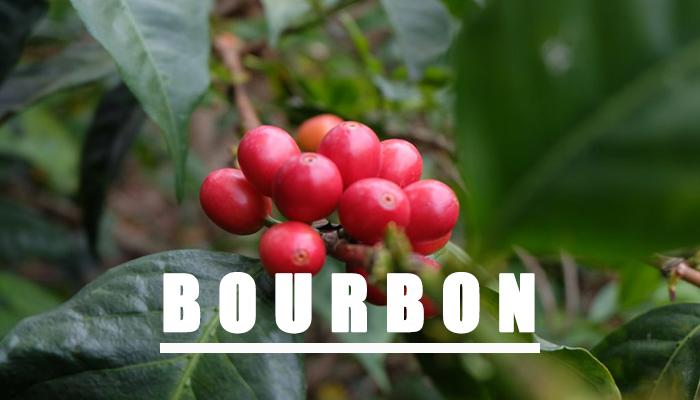 bourbon coffee có vẻ ngoài hấp dẫn
