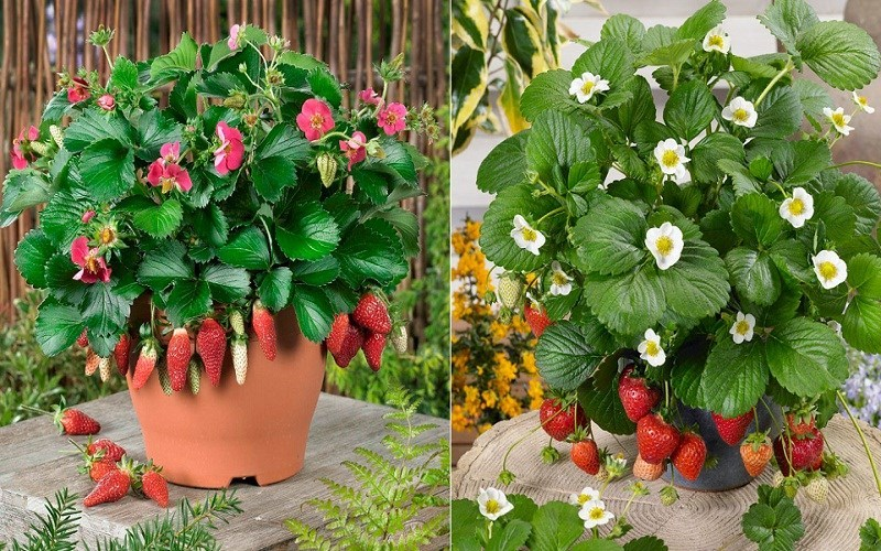 Ý tưởng kinh doanh cây xanh với hạt giống cây, hoa