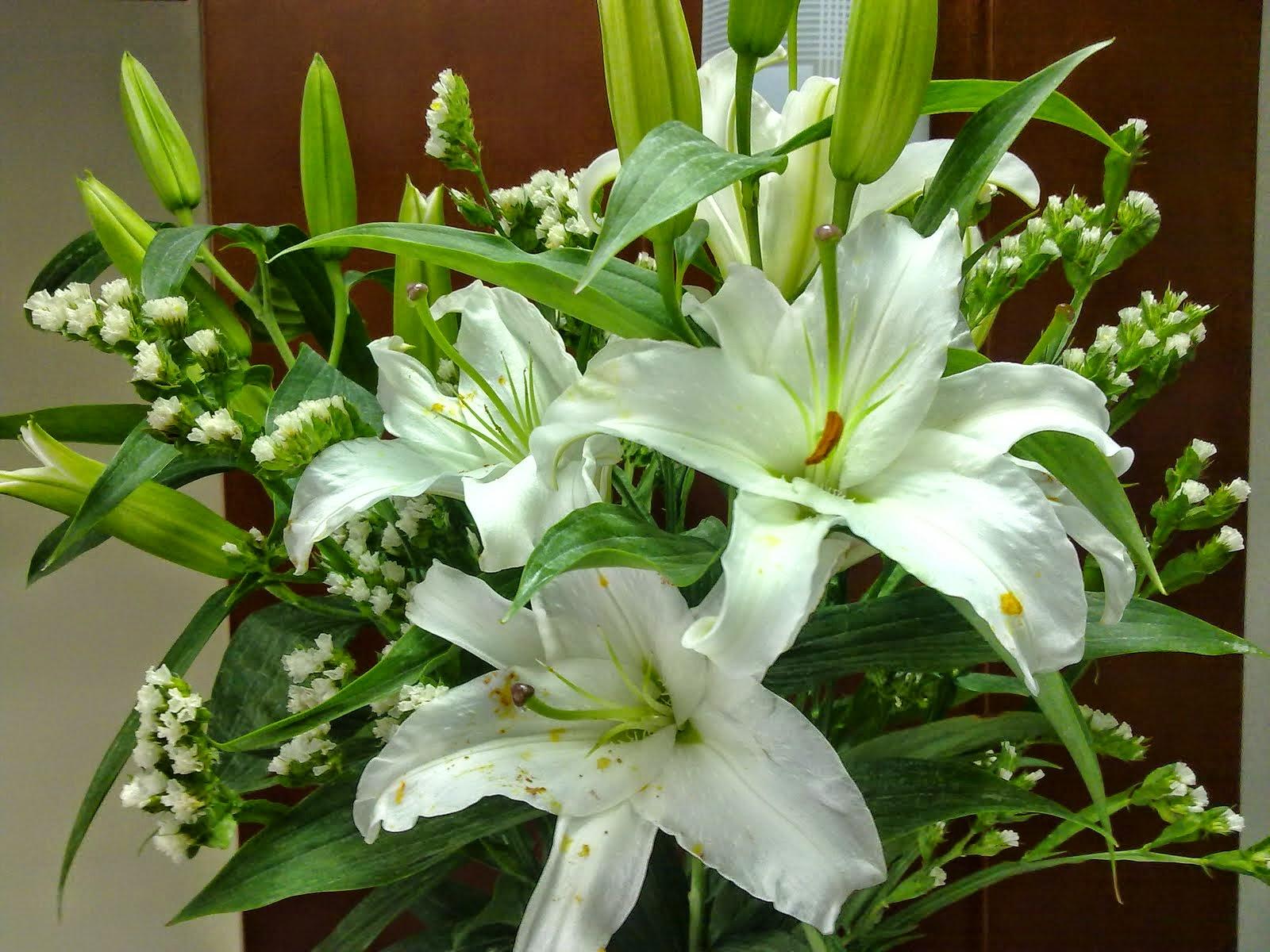 Hoa ly loại thường, có cánh nhỏ, màu trắng, hồng, cam