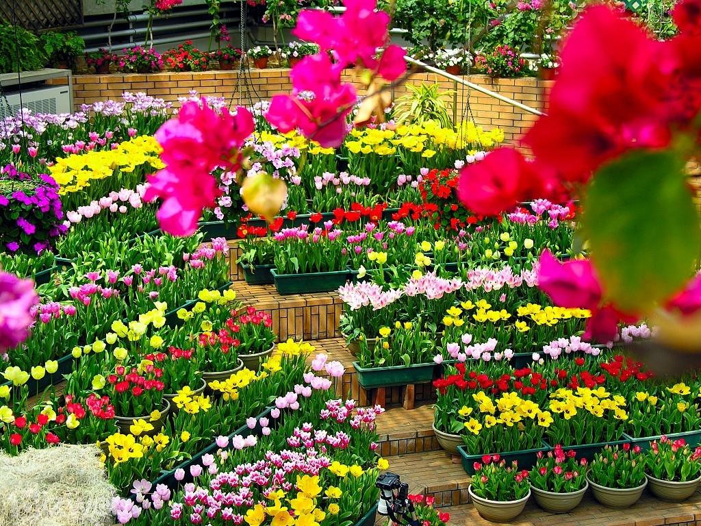 hoa online