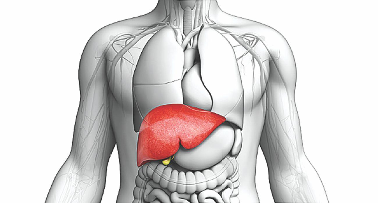 What_is_the_heaviest_internal_organ_in_the_human_body1557835175.jpg image