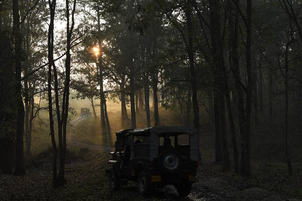 keralaforestecotourism.com,JEEP SAFARI AT 10 AM