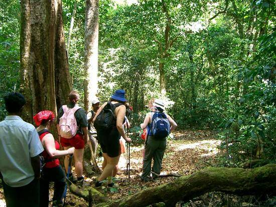 keralaforestecotourism.com,VIRAKUTHODU CHOORATHALA TREKKING (GROUP OF 3)