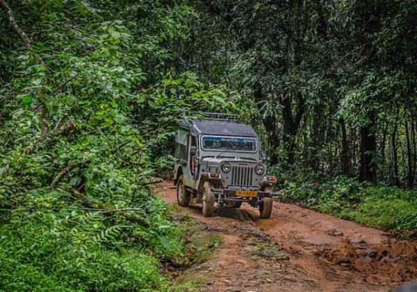 keralaforestecotourism.com,DREAM TRAIL NIGHT JEEP SAFARI (4 PERSONS FOR 3 HOUR)