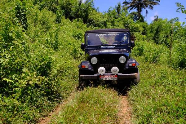 keralaforestecotourism.com,JEEP SAFARI (4 PERSONS FOR 3 HOUR)