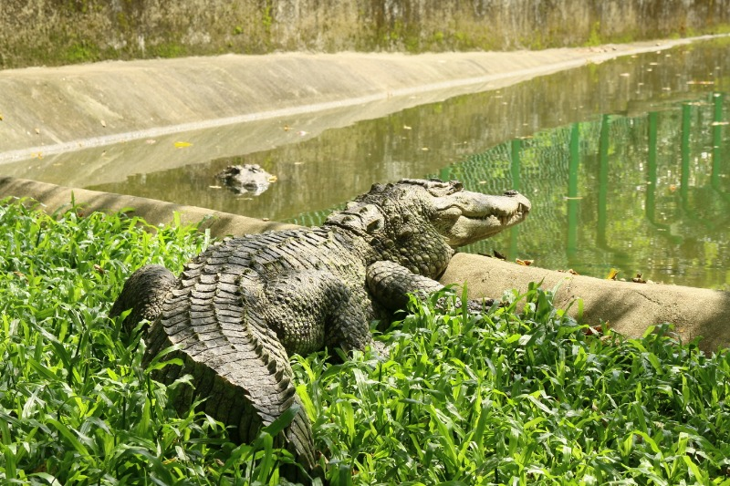 keralaforestecotourism.com,CROCODILE PROTECTION CENTRE