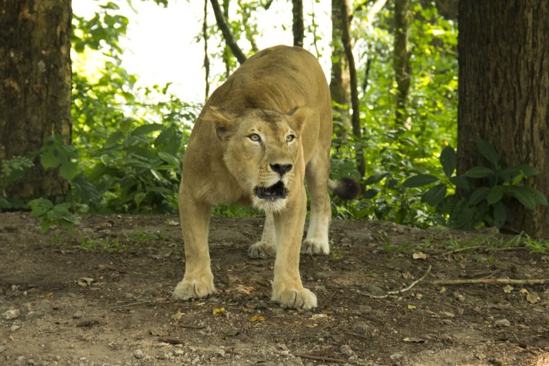 keralaforestecotourism.com,LION SAFARI PACKAGE