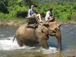 keralaforestecotourism.com,ELEPHANT RIDE 4PM