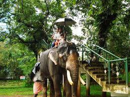 keralaforestecotourism.com,ELEPHANT RIDE 10AM