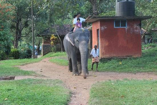 keralaforestecotourism.com,ELEPHANT RIDE 9AM