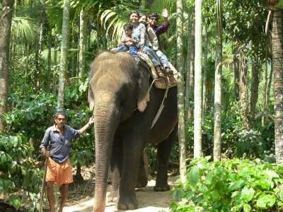 keralaforestecotourism.com,ELEPHANT RIDE 3PM