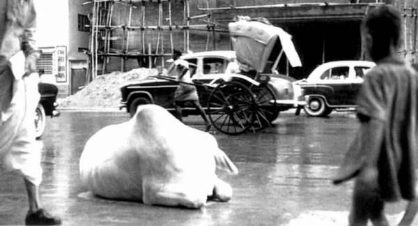 कोलकाता में चे गेवारा की खींची एक तस्वीर (सेल्फ पोर्ट्रेट किताब से)