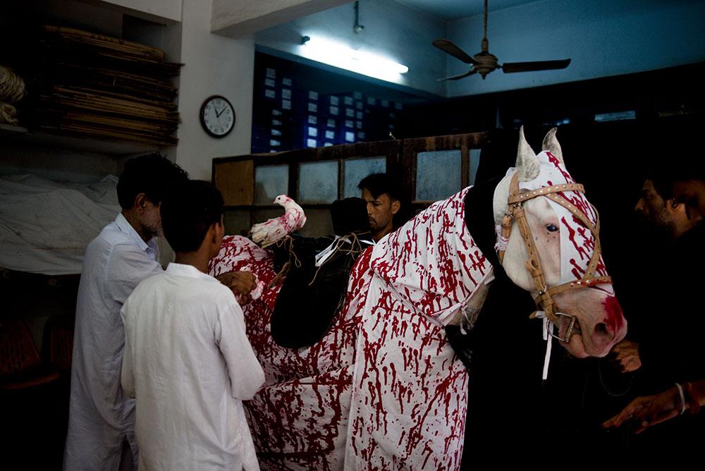 The Badshahs of Karachi: Why a few snow-white stallions live the ...