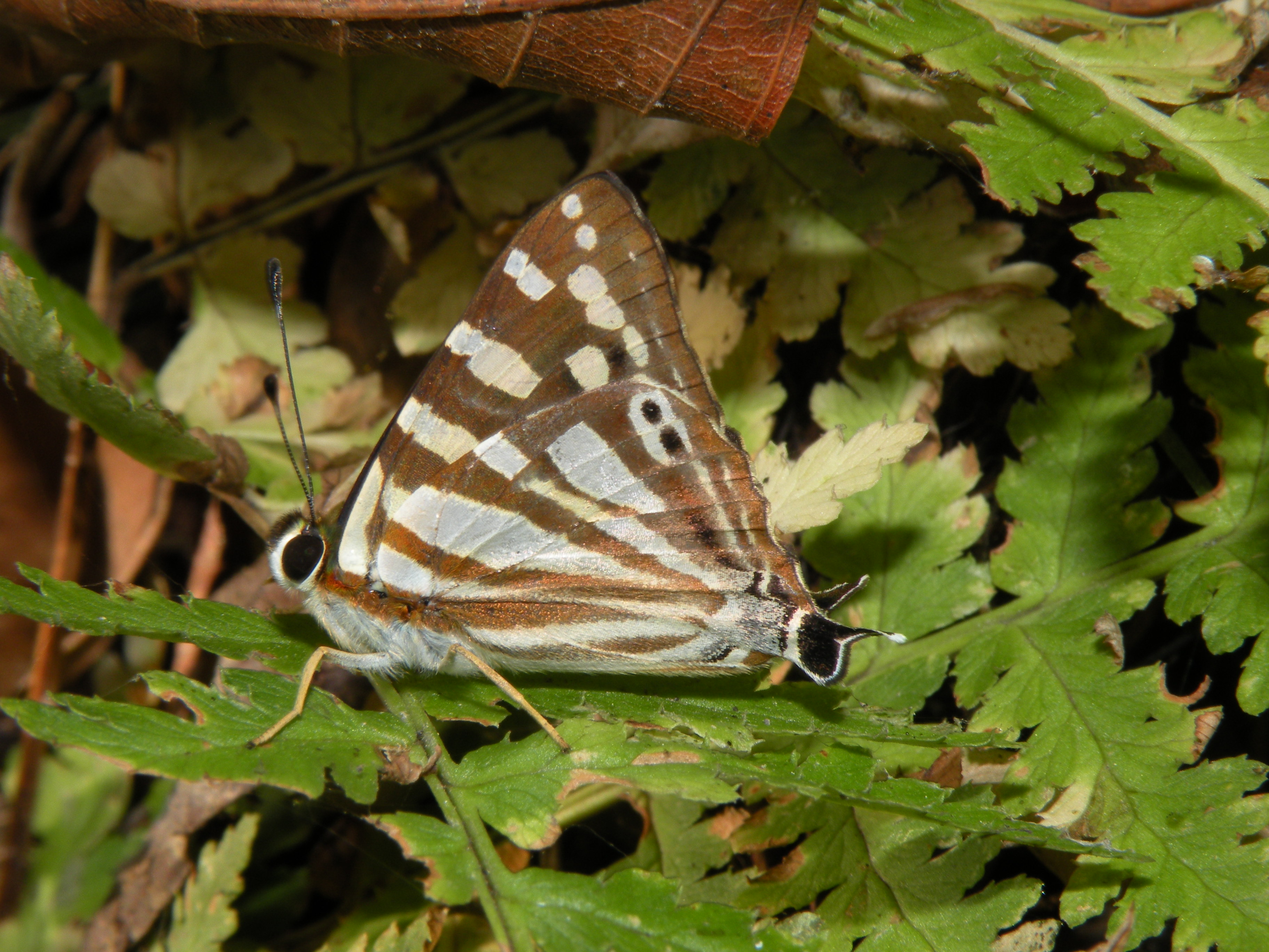 photos not just pretty pictures a new butterfly catalogue can