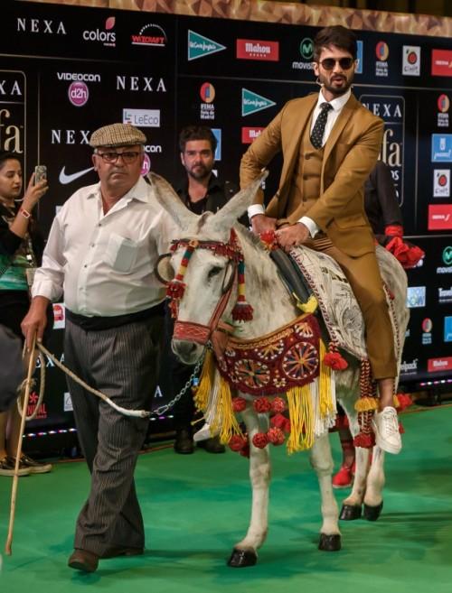 Shahid Kapoor killing it at IIFA 2016. Yay or Nay? - SeenIt