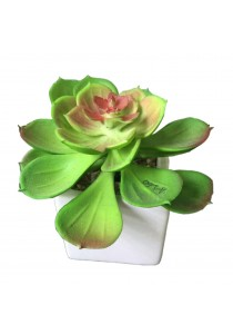 Artificial Succulent with White Porcelain Flower Pot - G