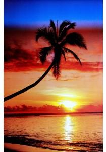 Framed Poster: Sunset & Palm Tree - GB Eye Poster (61 cm X 91.5 cm)