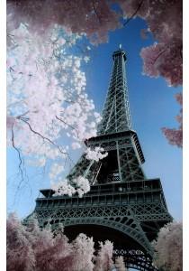 Eiffel Tower, Paris (David Clapp) - Pyramid International Poster (61 cm X 91.5 cm)