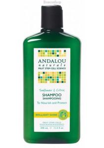ANDALOU NATURALS Shampoo - Brilliant Shine Sunflower & Citrus