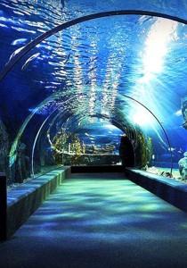 SEA LIFE Bangkok Ocean World 5 in 1 Admission Ticket - 2 Adult