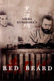 ไอ้เคราแดง (Red Beard)