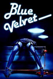 เมืองทมิฬ ปมมรณะ (Blue Velvet)