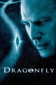 ลางรัก ข้ามภพ (Dragonfly)