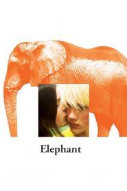 โศกนาฏกรรมและการสูญเสีย (Elephant)