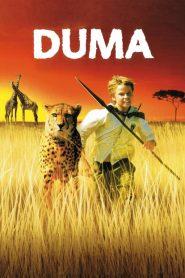 ดูม่า (Duma)