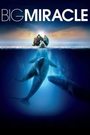 ปาฏิหาริย์วาฬสีเทา (Big Miracle)