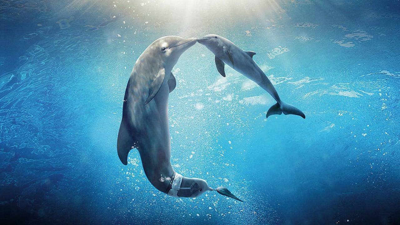มหัศจรรย์โลมาหัวใจนักสู้ ภาค 2 (Dolphin Tale 2)