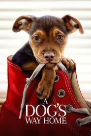 เพื่อนรักผจญภัยสี่ร้อยไมล์ (A Dog's Way Home)