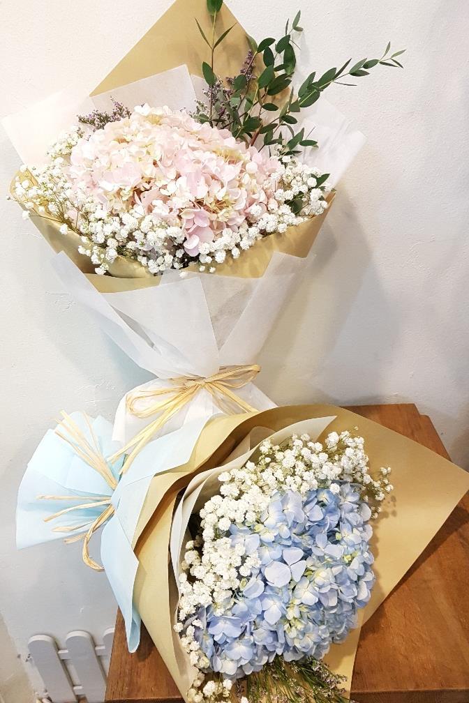 Pastel Hydrangea