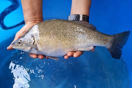 Fresh Catch Fish
