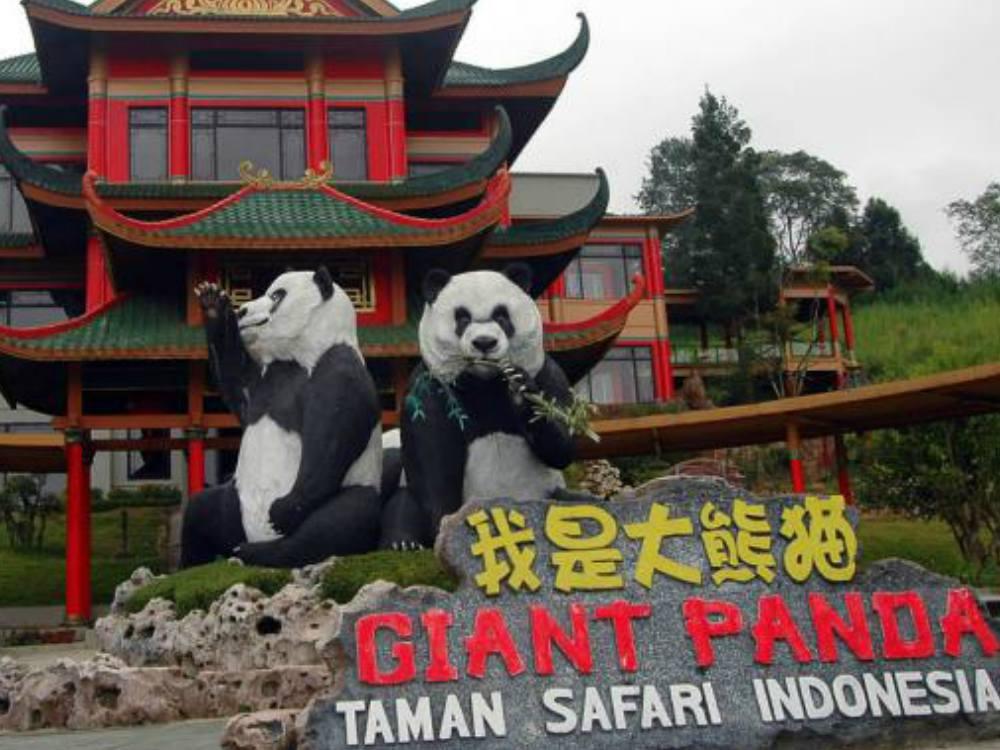 Panda di Taman Safari Indonesia