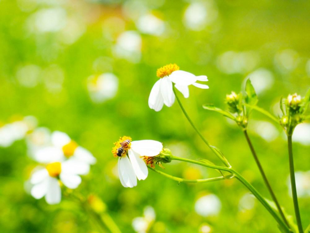Pelajaran Hidup Dari Lebah - Cover