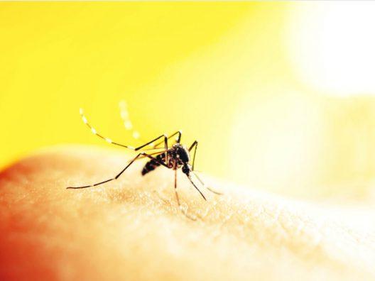 Bahan Alami Untuk Mengatasi Gigitan Nyamuk - Cover