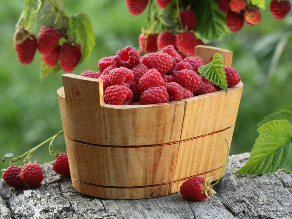 manfaat buah raspberry