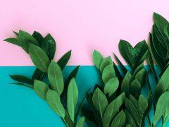 Manfaat Klorofil untuk Kesehatan dan Kecantikan Kulit