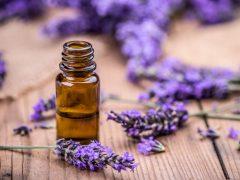 Manfaat Lavender Oil untuk Kecantikan