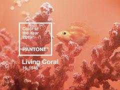 coral blush