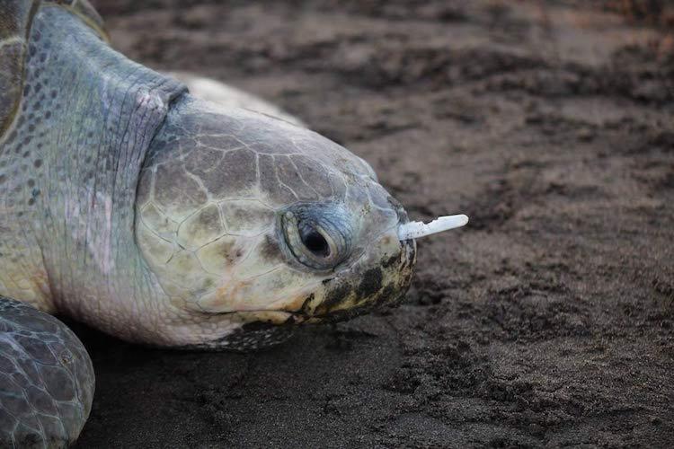 Kampanye Anti Sedotan Plastik di Indonesia