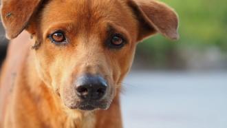 dog-1345533_1280