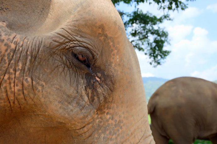 Elephant Nature Park1