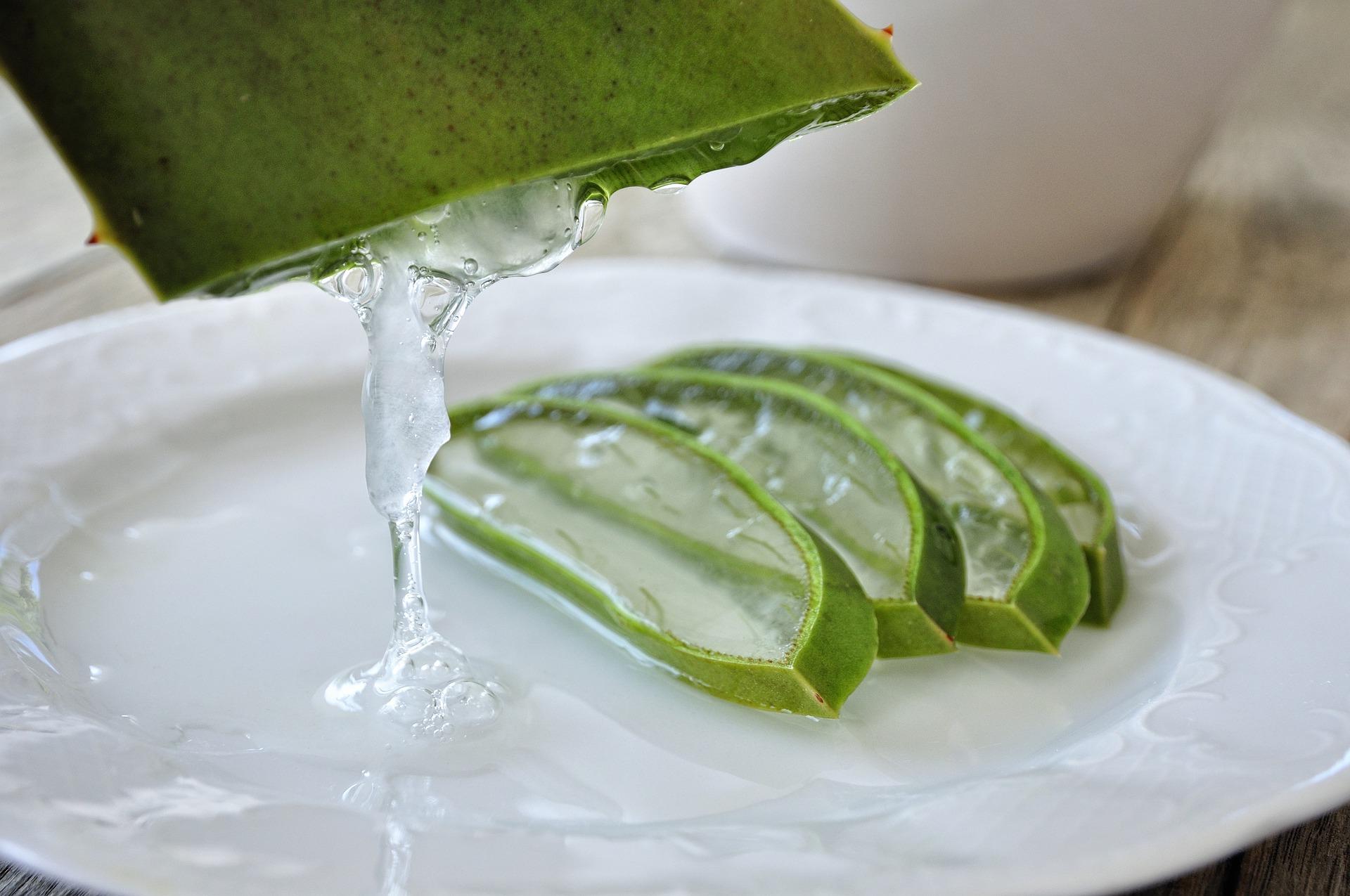 squarerooms-aloe-vera-plant-fresh-gel-squeeze-plate