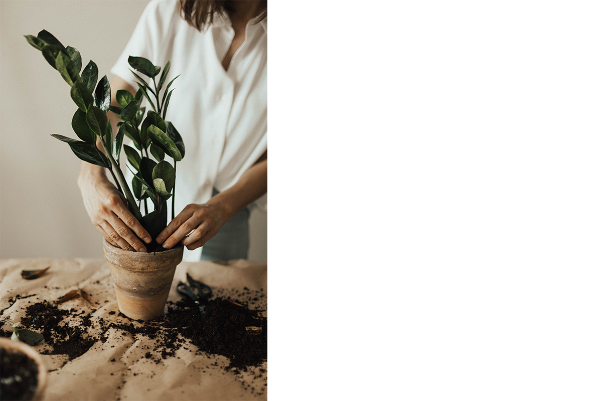 squarerooms-plant-pot-indoor-gardening-hands-aesthetic-vintage-hispter
