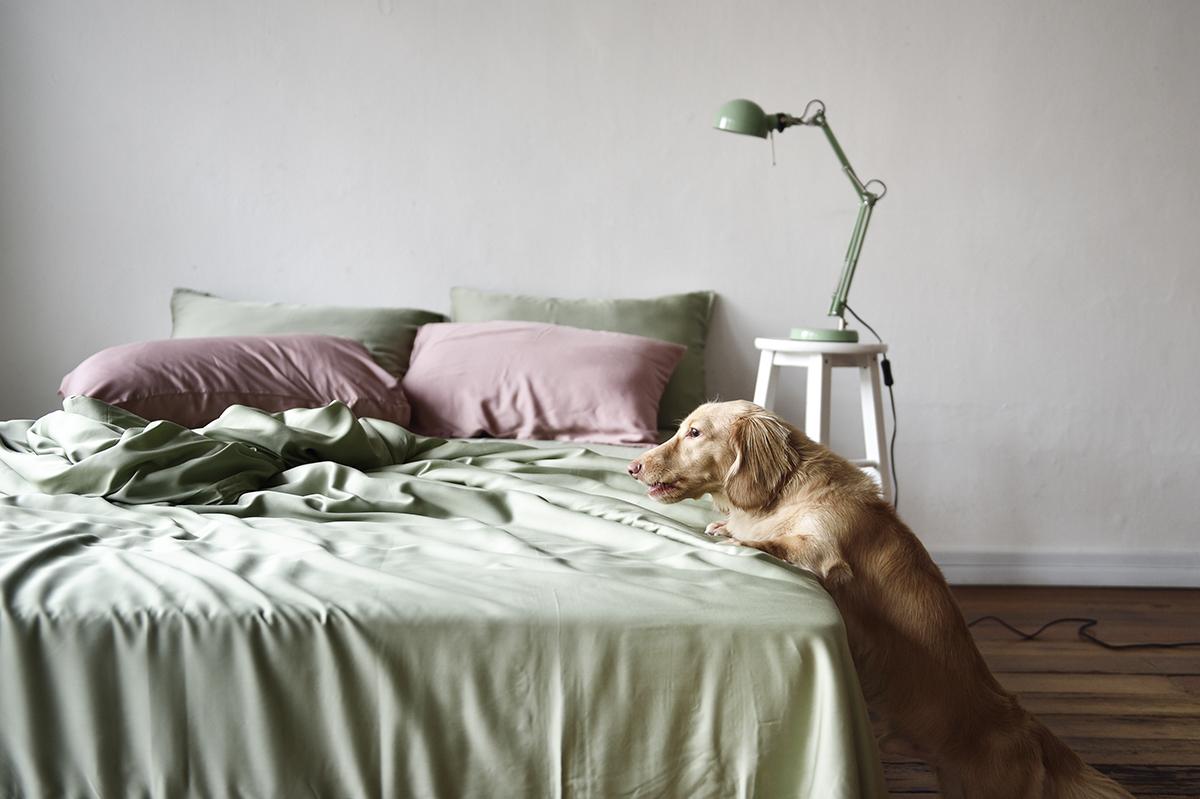 squarerooms sunday bedding bed bedsheets sheets green dog golden retriever climbing lamp pillows blanket purple bedroom