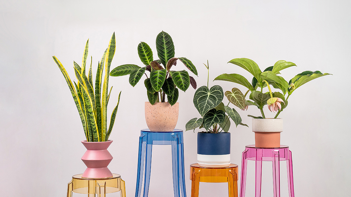 squarerooms tumbleweed plants pots planters colourful