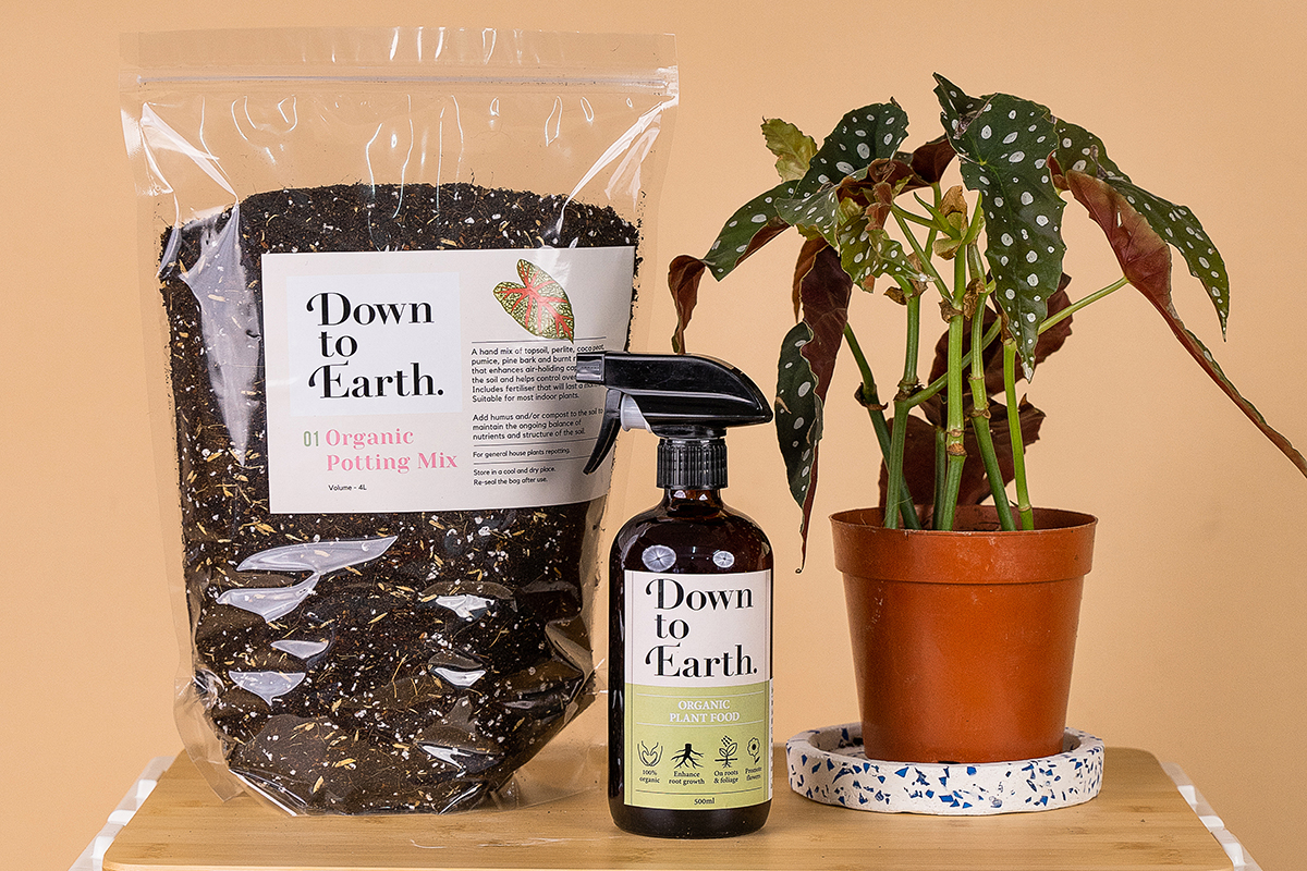 squarerooms tumbleweed plants soil fertiliser products shop buy orange