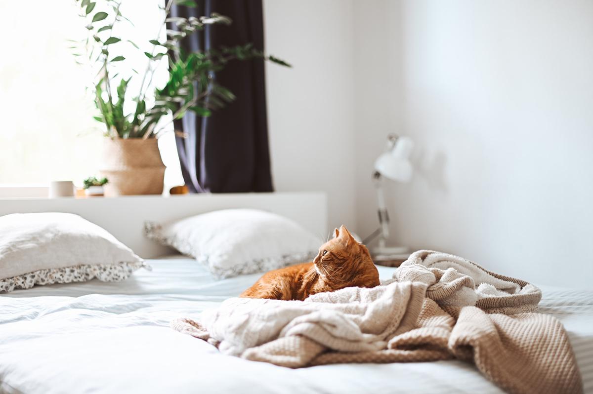 squarerooms bedroom mattress bed cat blankets cosy bedding